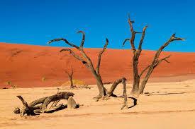 環境や気候によるエイジング毛の原因